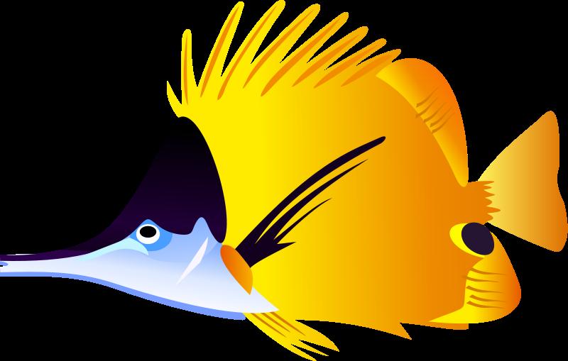 Angelfish clipart puffer fish #1 - Angel Fish PNG HD
