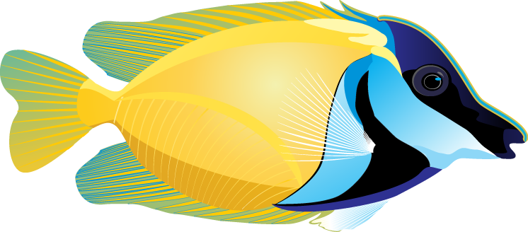 Colorful tropical fish clipart. - Angel Fish PNG HD
