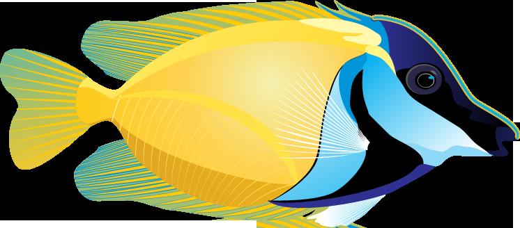 Angel Fish PNG HD - 131189