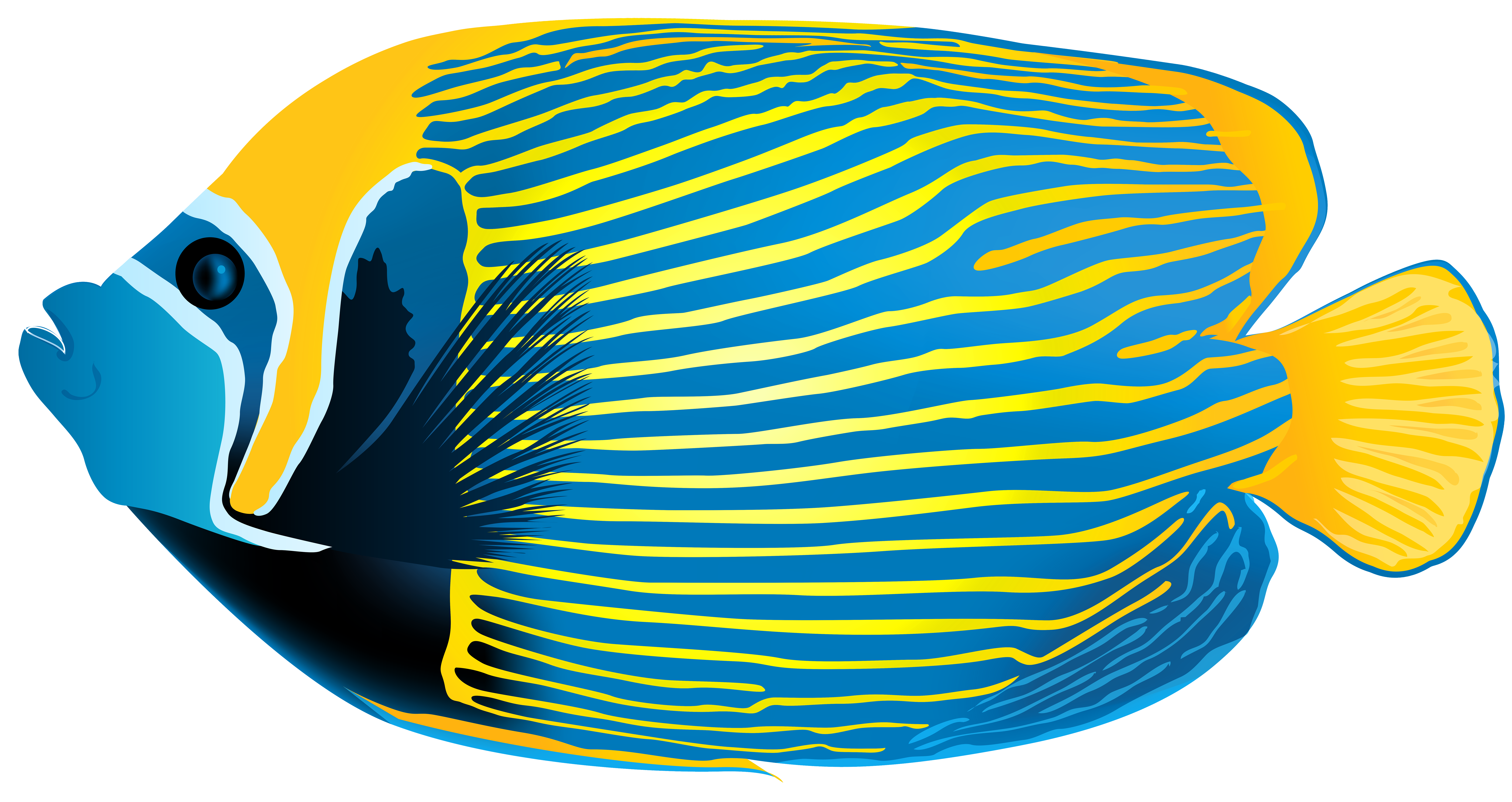 Emperor Angelfish PNG Transparent Clip Art Image - Angel Fish PNG HD
