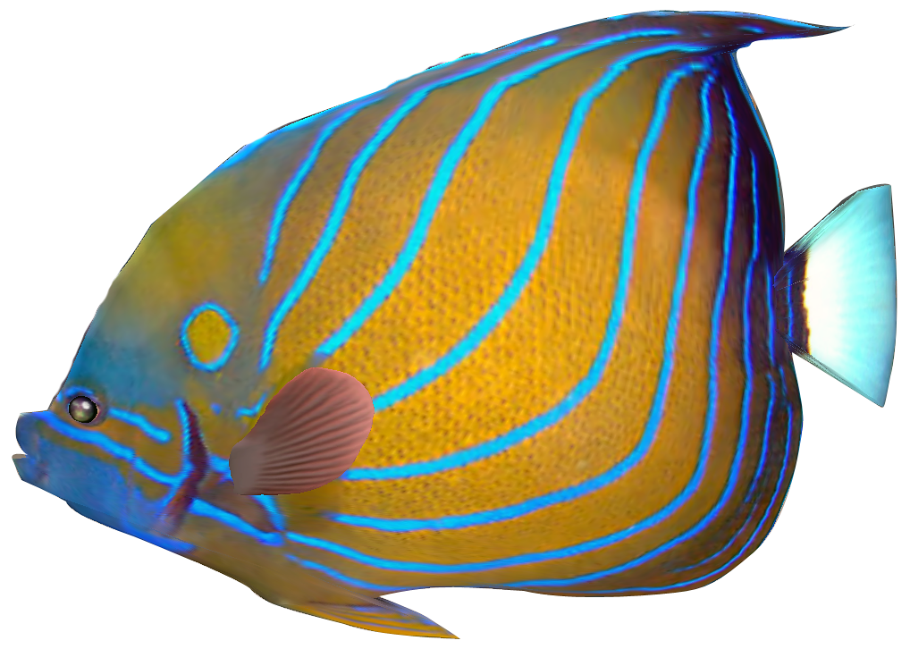 Marine Fish clipart transparent fish #5 - Angel Fish PNG HD