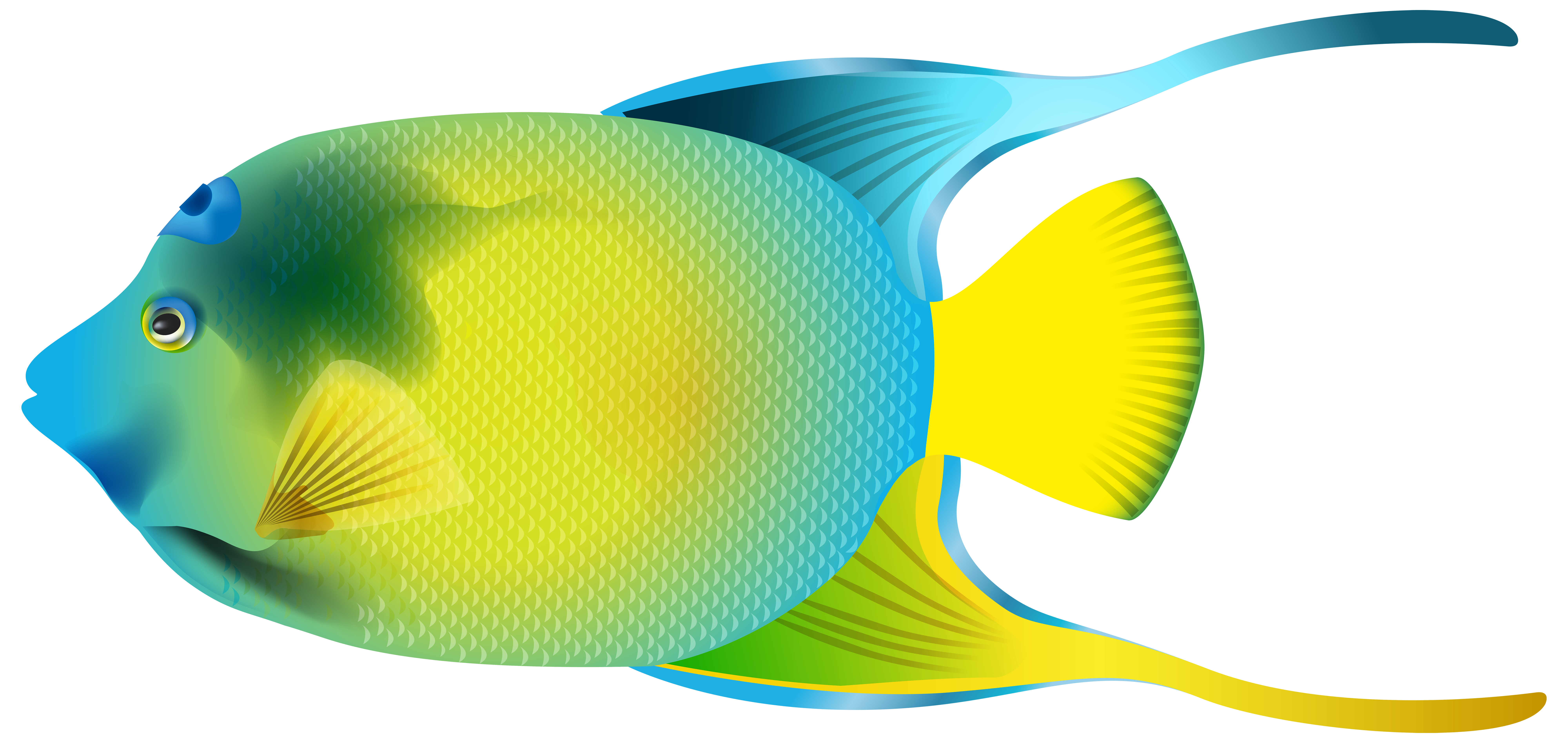 Queen Angelfish PNG Transparent Clip Art Image - Angel Fish PNG HD