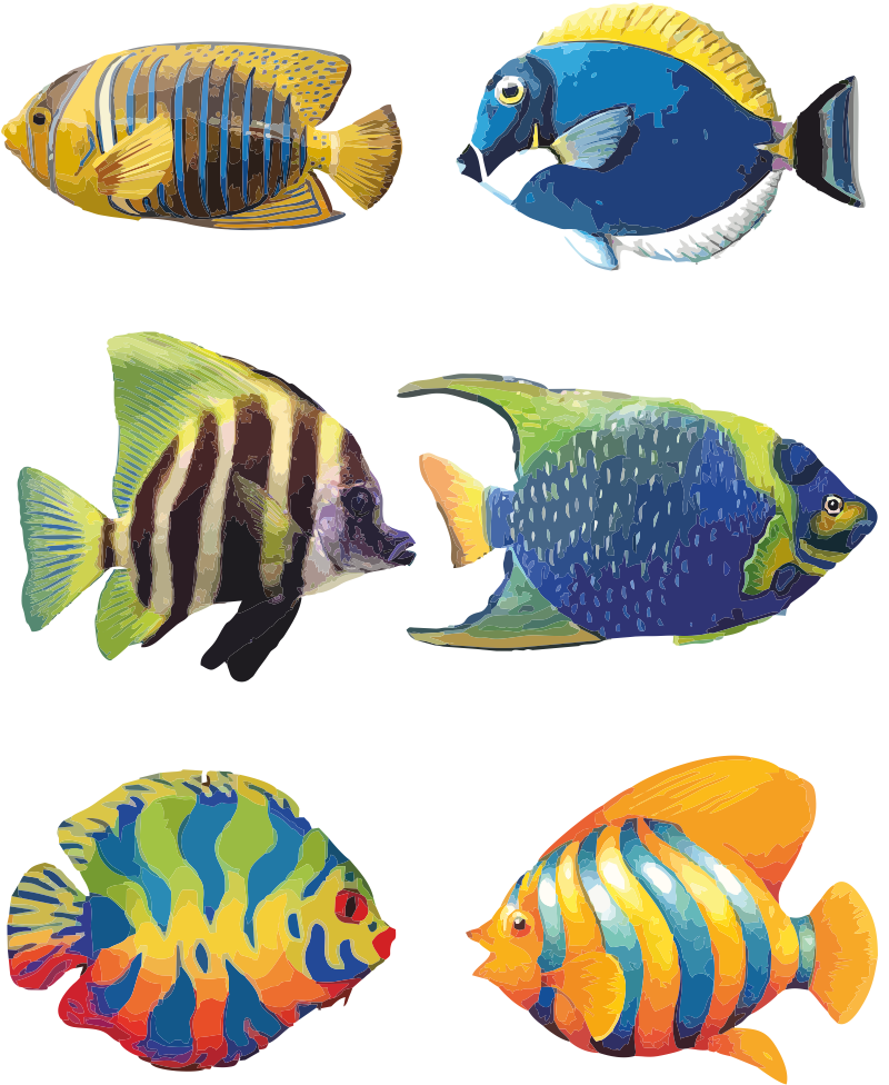 Tropical Fish - Angel Fish PNG HD