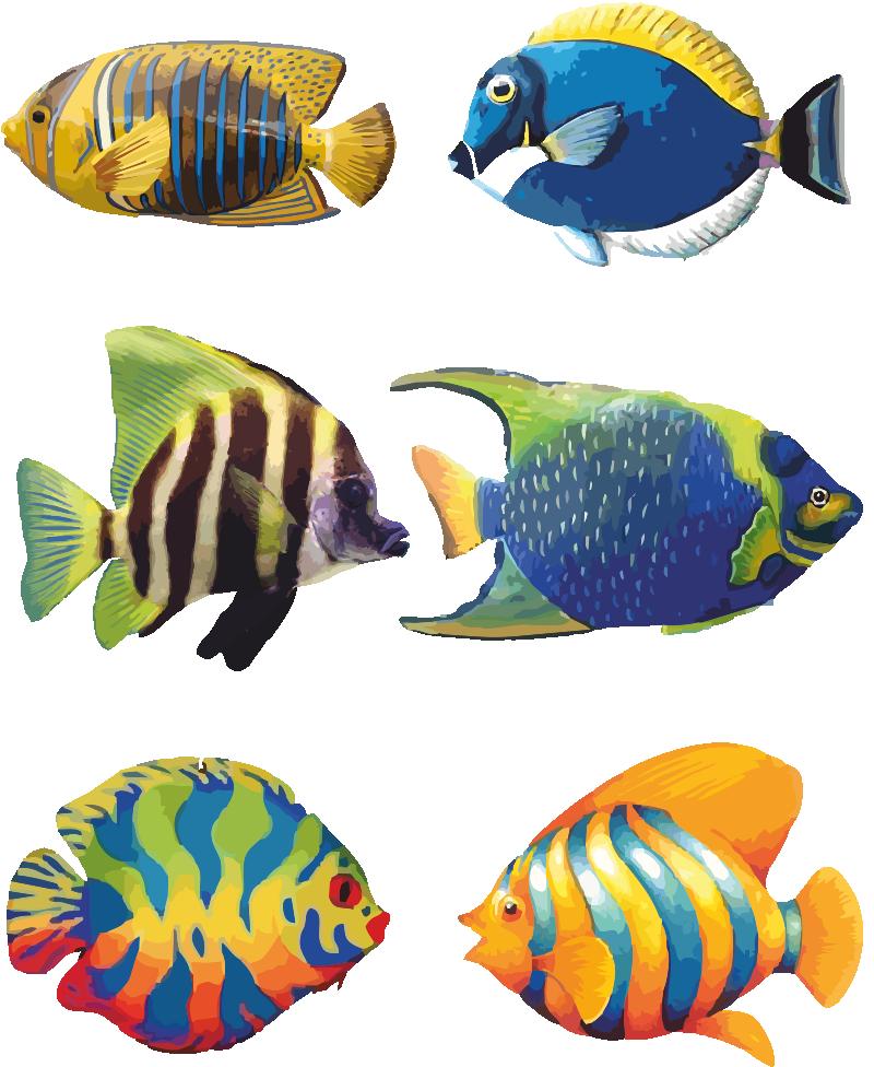 Tropical Fish - Angel Fish PNG HD