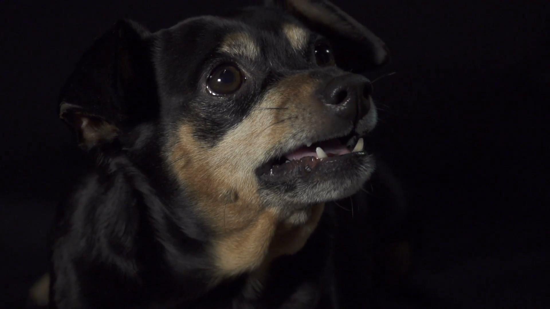 Angry Dog PNG HD - 137283