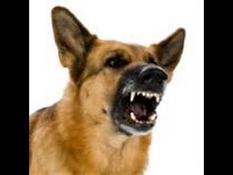 Angry Dog Bark and Growl Sound Effects - Angry Dog PNG HD