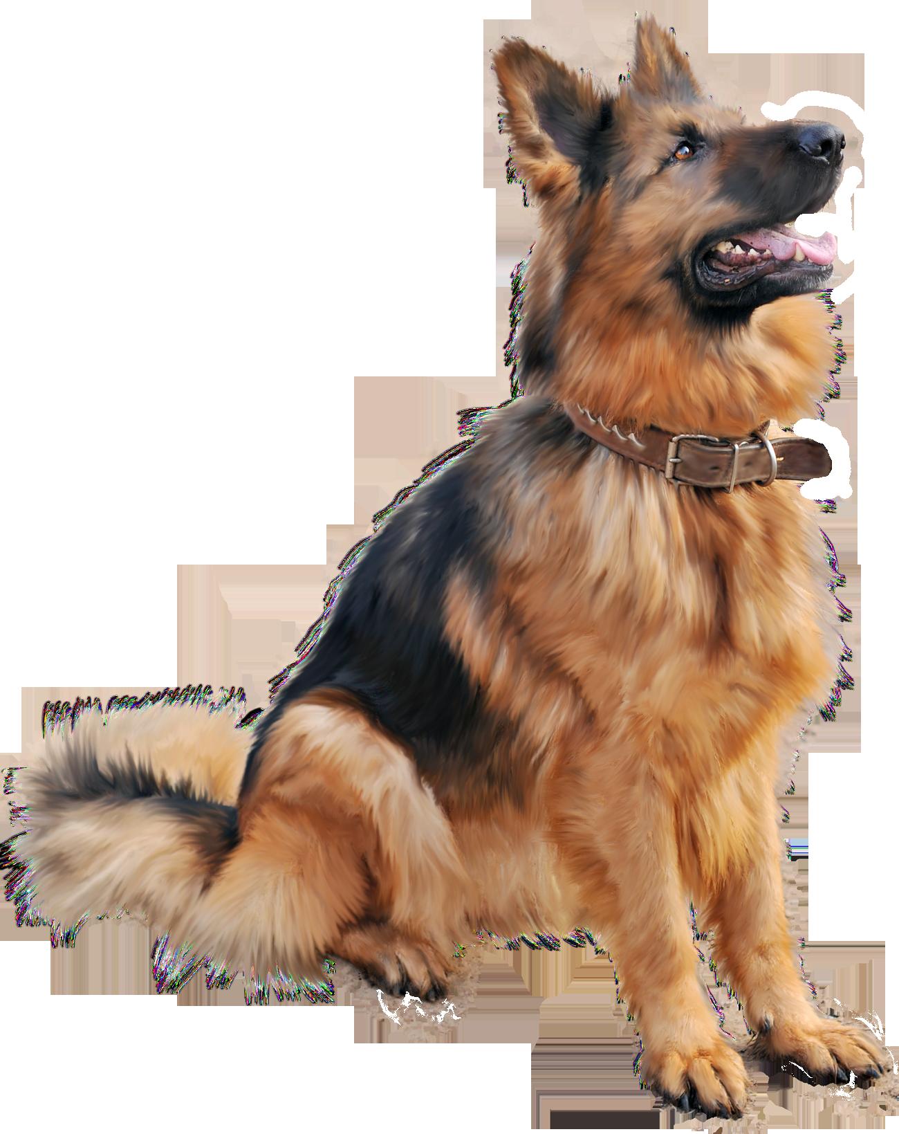 Angry Dog PNG HD - 137281