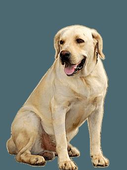 Angry Dog PNG HD - 137277