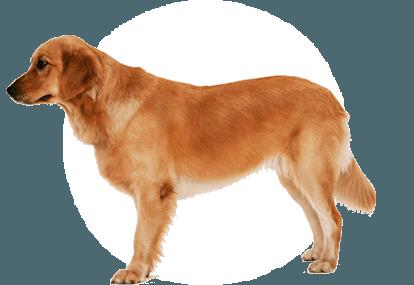 Angry Dog PNG HD - 137289