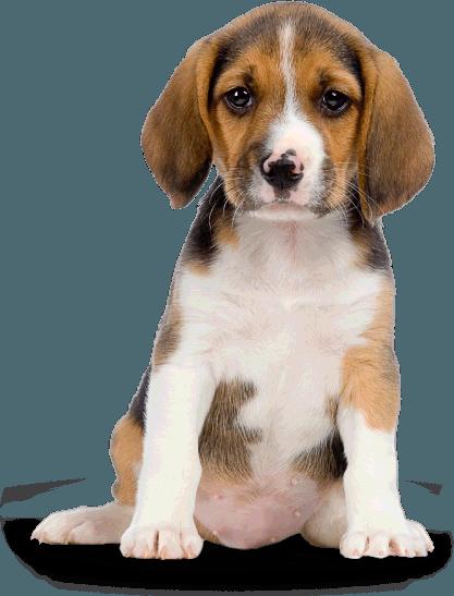 Angry Dog PNG HD - 137290