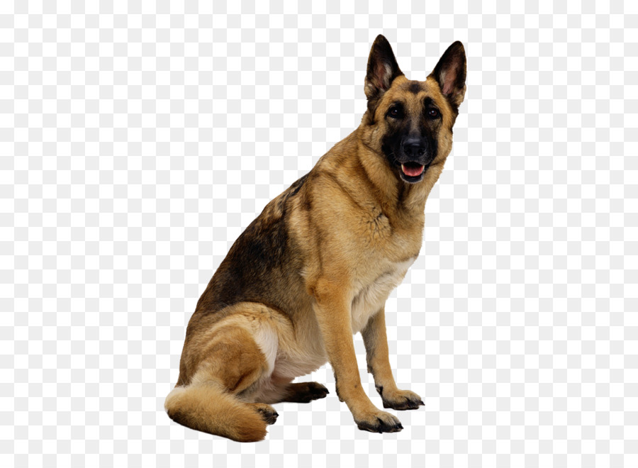 German Shepherd Clip art - dog png image, picture, download, dogs - Angry Dog PNG HD