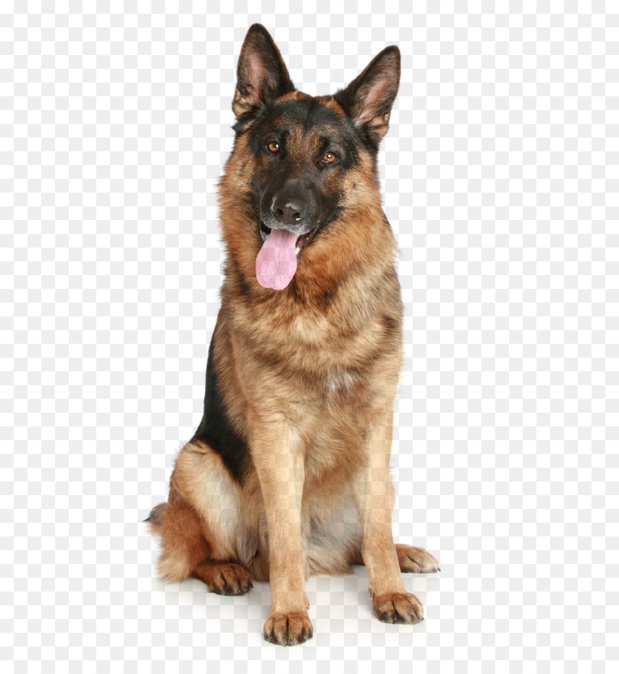 Angry Dog PNG HD - 137287