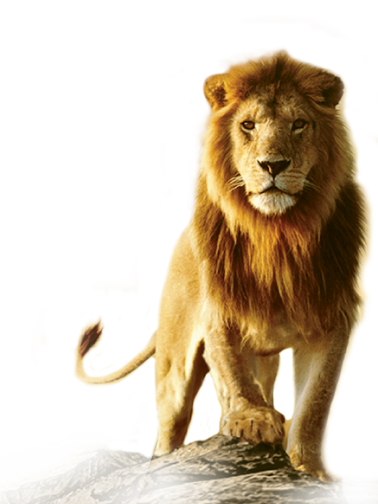 378x504 px - Angry Lion PNG HD