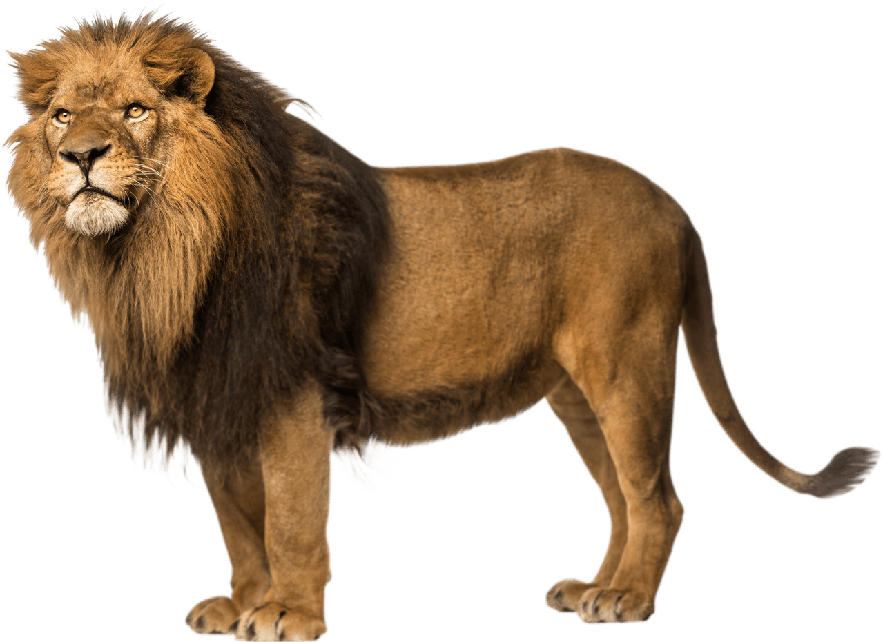 Download PNG image - Lion Free Download Png - Angry Lion PNG HD