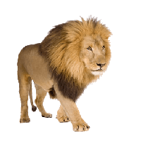Lion Png Image Image Download Picture Lions PNG Image - Angry Lion PNG HD