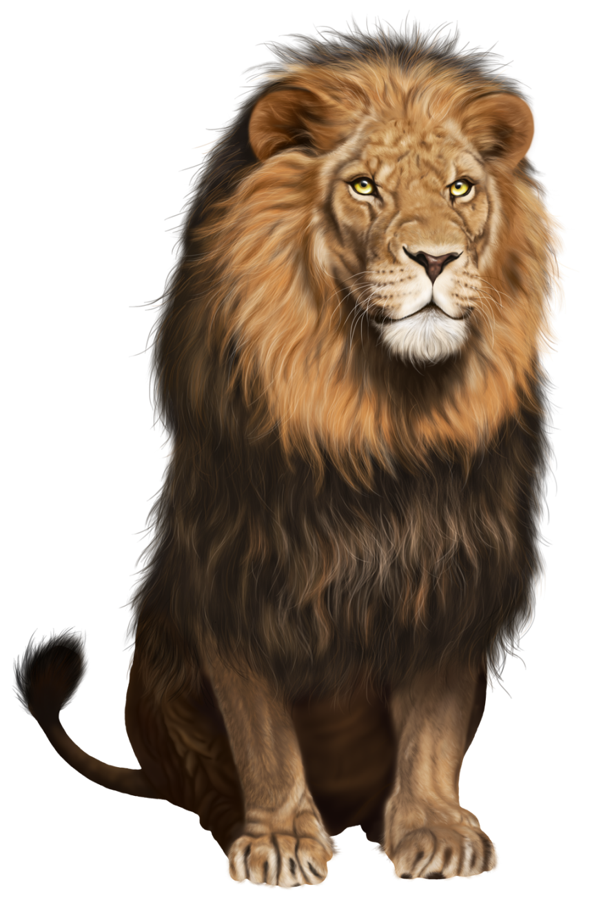 Lion Transparent PNG Clip Art Image - Angry Lion PNG HD