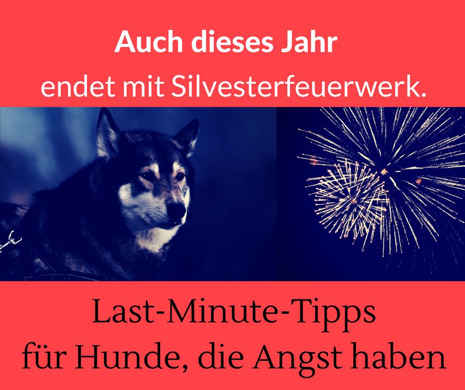 Last-Minute-Tipps für Hunde, die Angst vor Silvester haben u203a Die  Hundephilosophin | Hundeschule | Hundetraining | Miriam Arndt-Gabriel |  Frankfurt und PlusPng.com  - Angst Haben PNG