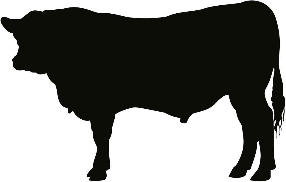 angus bull cattle cow art artwork silhouette - Angus Bull PNG