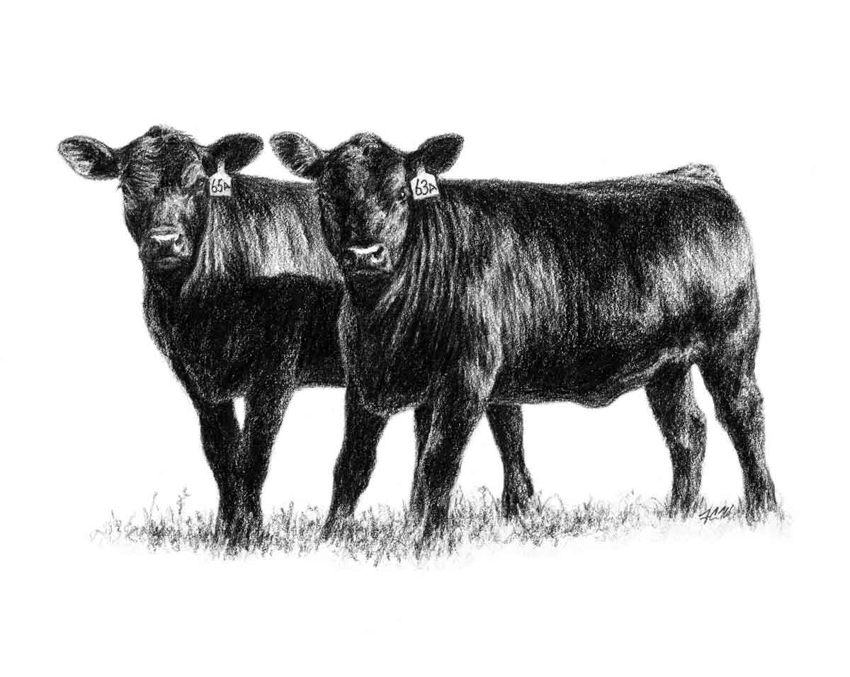 Angus Cattle PNG-PlusPNG.com-1200 - Angus Cattle PNG