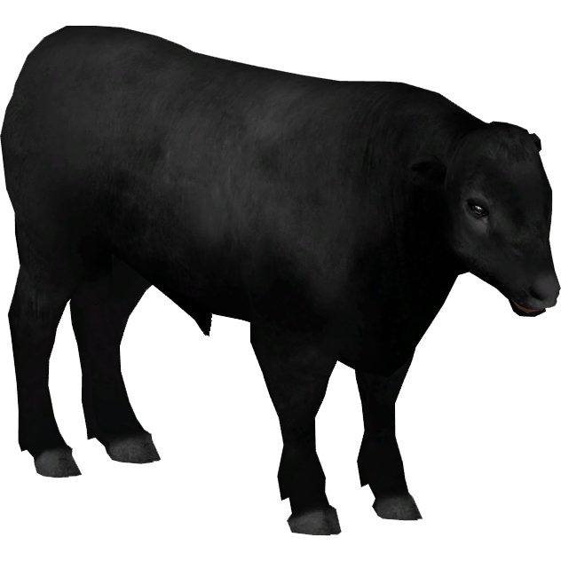 Aberdeen Angus Cattle (Ulquiorra) | ZT2 Download Library Wiki | FANDOM  powered by Wikia - Angus Cattle PNG