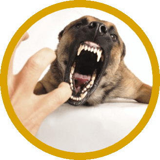If you have been bitten by a dog in Illinois and have questions about your  legal rights, contact us immediately to speak with an Illinois Dog Bite  Attorney.