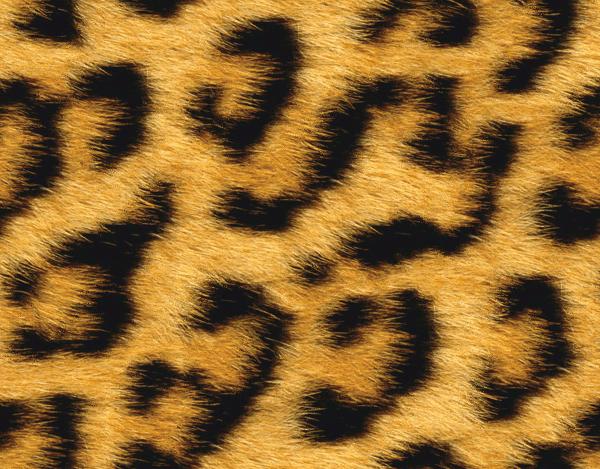 Animal Fur PNG