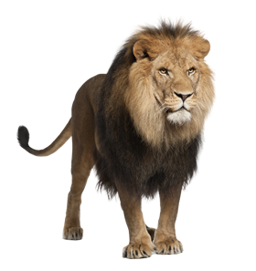 Format: PNG - Animal HD PNG