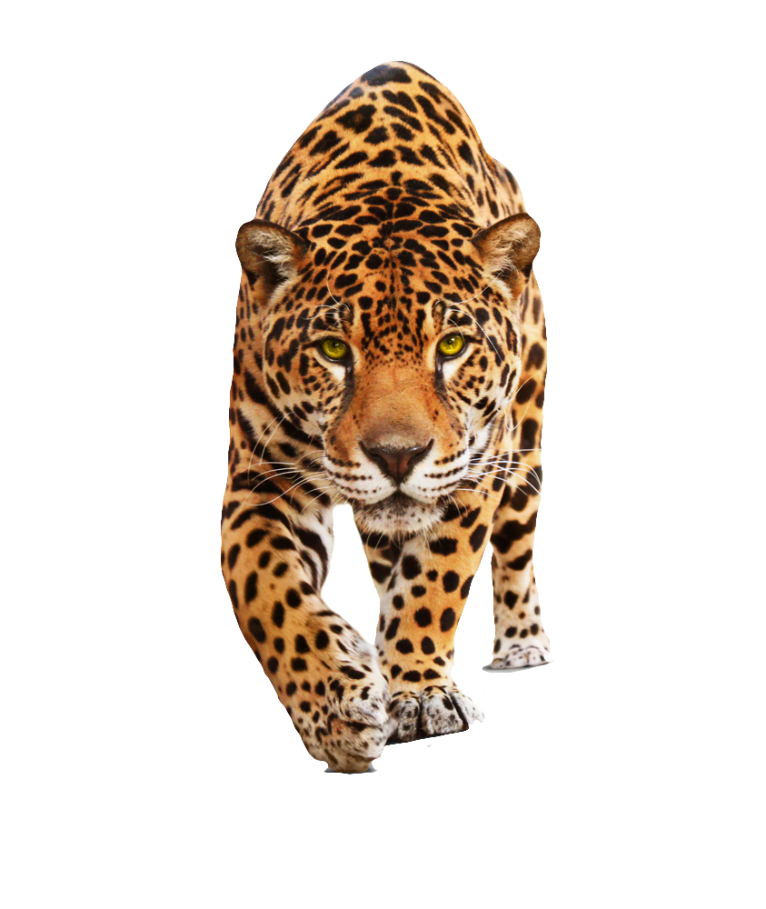 Jaguar-PNG-HD.png - Animal HD PNG