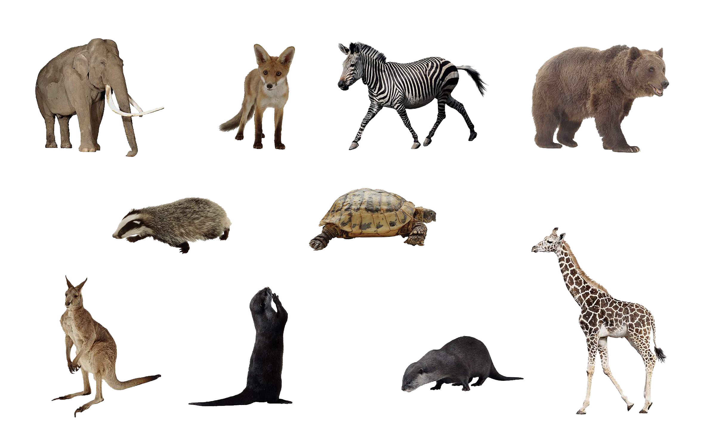 File:Animals png set by mossi889-d4uye4q.png - Animal PNG