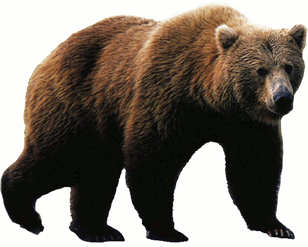 grizzly bear photo - Animal PNG