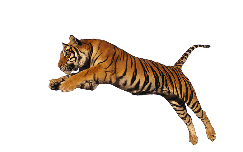 Download PNG image - Tiger Pn