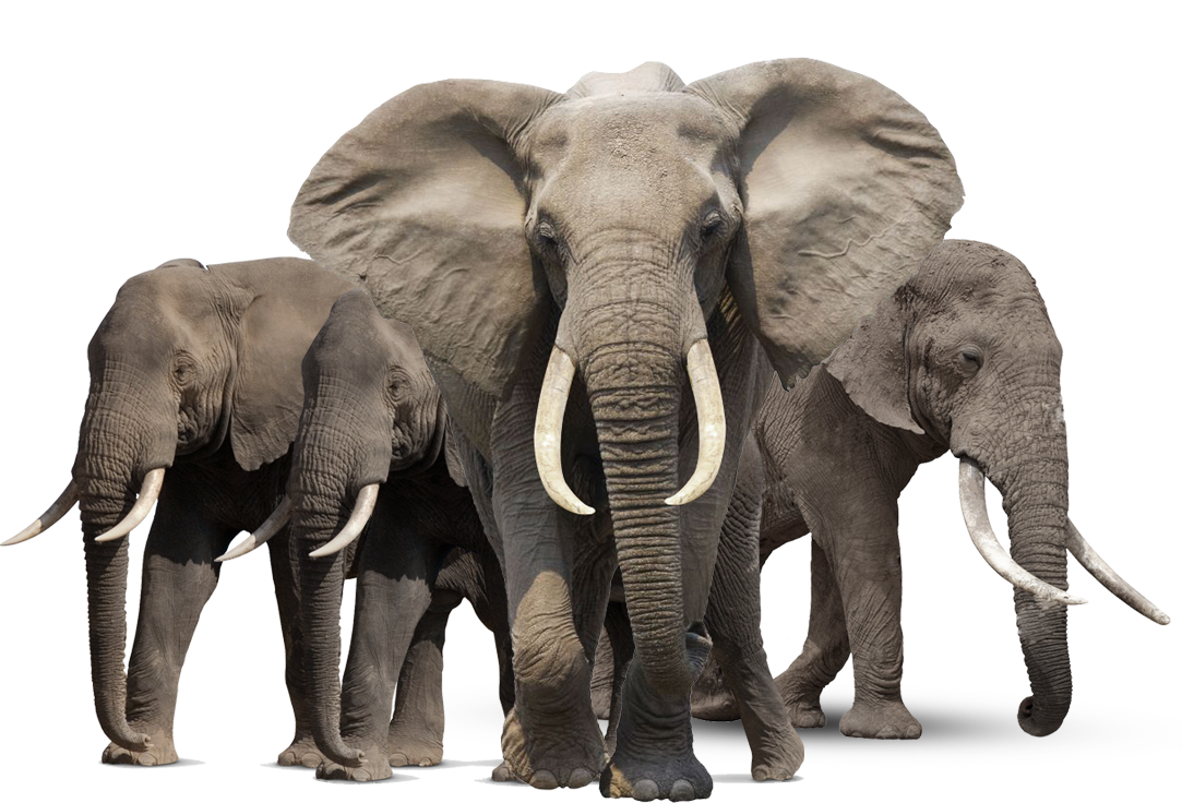 Elephant PNG HD - Animal PNG HD