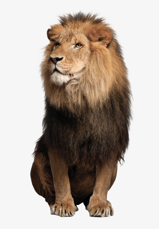 Lions Lions, Lions, Animal, Big PNG Image - Animal PNG HD
