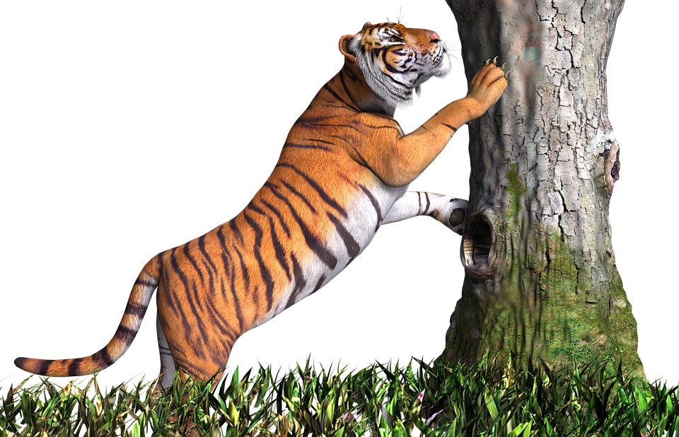 Tiger Animal Cat Design 3D Render Png Tige - Animal PNG HD
