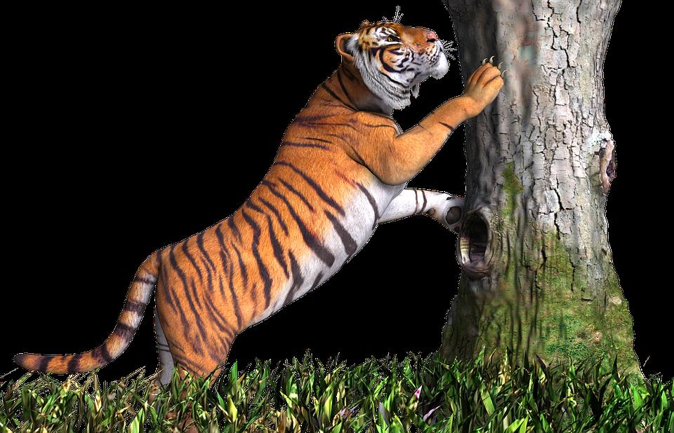Tiger Animal Cat Design 3D Render Png Tige - Animal PNG HD
