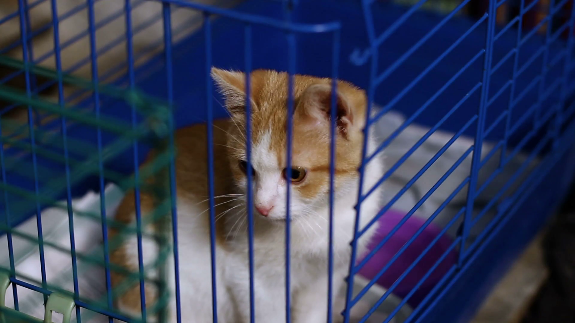 Close-up shot of cute mongrel little kitty sitting in the cage at the animal  shelter. HD Stock Video Footage - VideoBlocks - Animal Shelter PNG HD