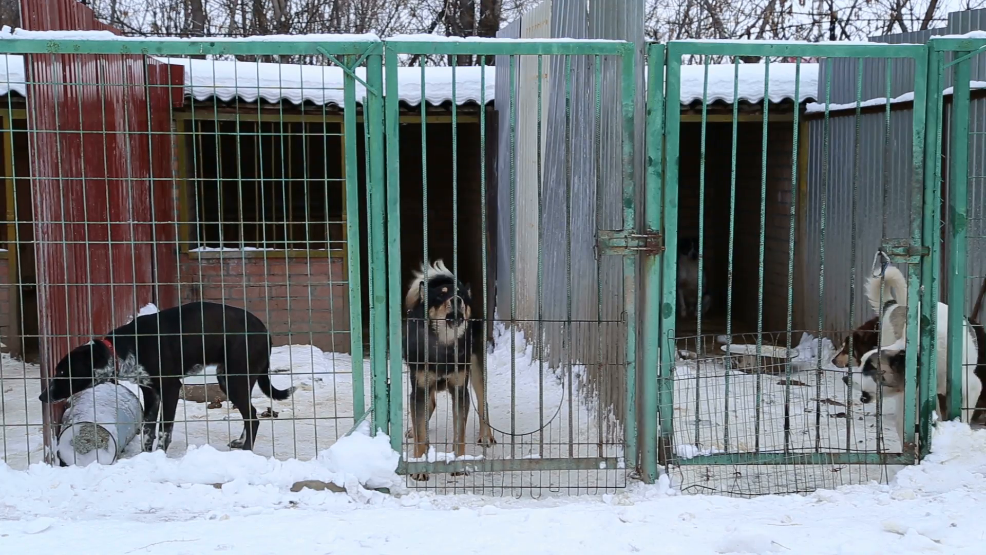 Outdoors animal shelter in winter, the dogs bark behind bars, they missing  his owners and waiting for new owners Stock Video Footage - VideoBlocks - Animal Shelter PNG HD
