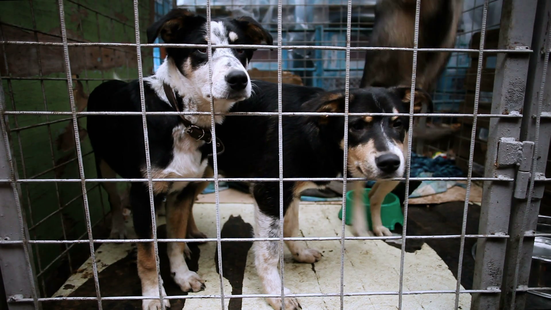 Three homeless cute mongrel puppies looking at camera through bars in an animal  shelter. HD Stock Video Footage - VideoBlocks - Animal Shelter PNG HD