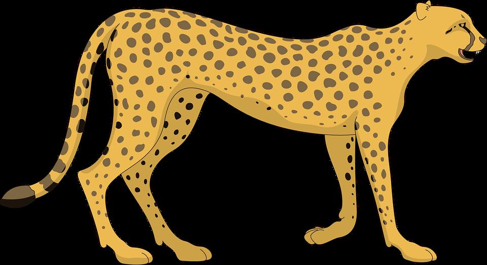 cat cheetah walking animal tail spots paws spot - Animal Tail PNG