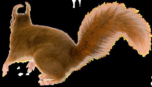 [ IMG] - Animal Tail PNG