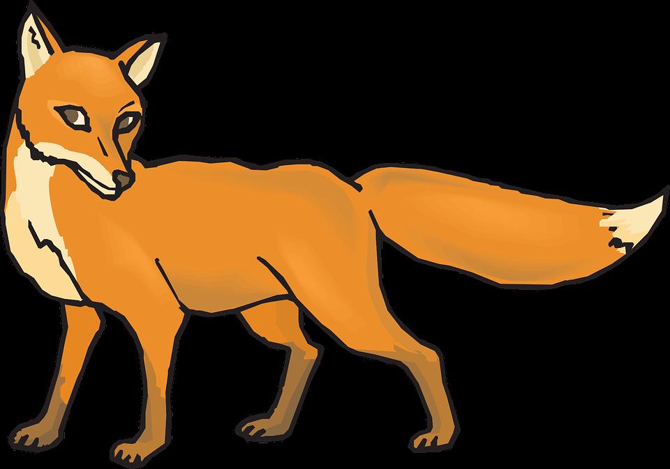 orange fox animal tail fur shy - Animal Tail PNG