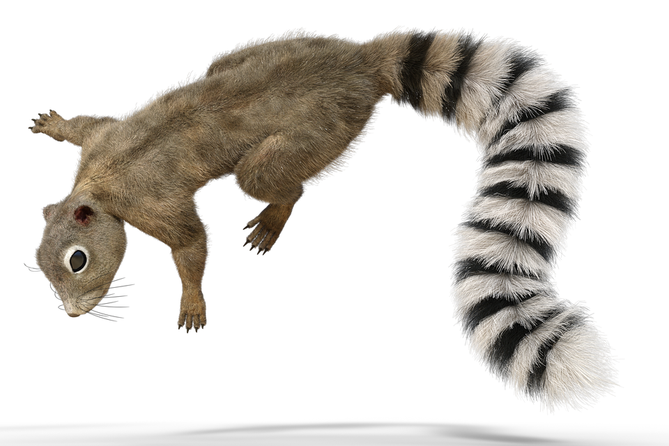 squirrel tail animal forest fur nature cute - Animal Tail PNG