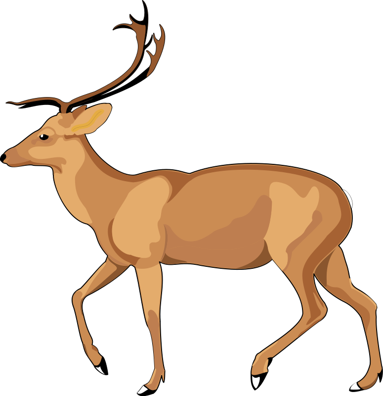 Animal Vector PNG - 114255