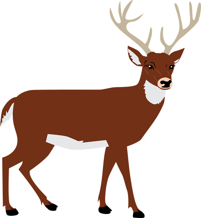 Hart, Antlers, Forest, Animal, Vector - Animal Vector PNG