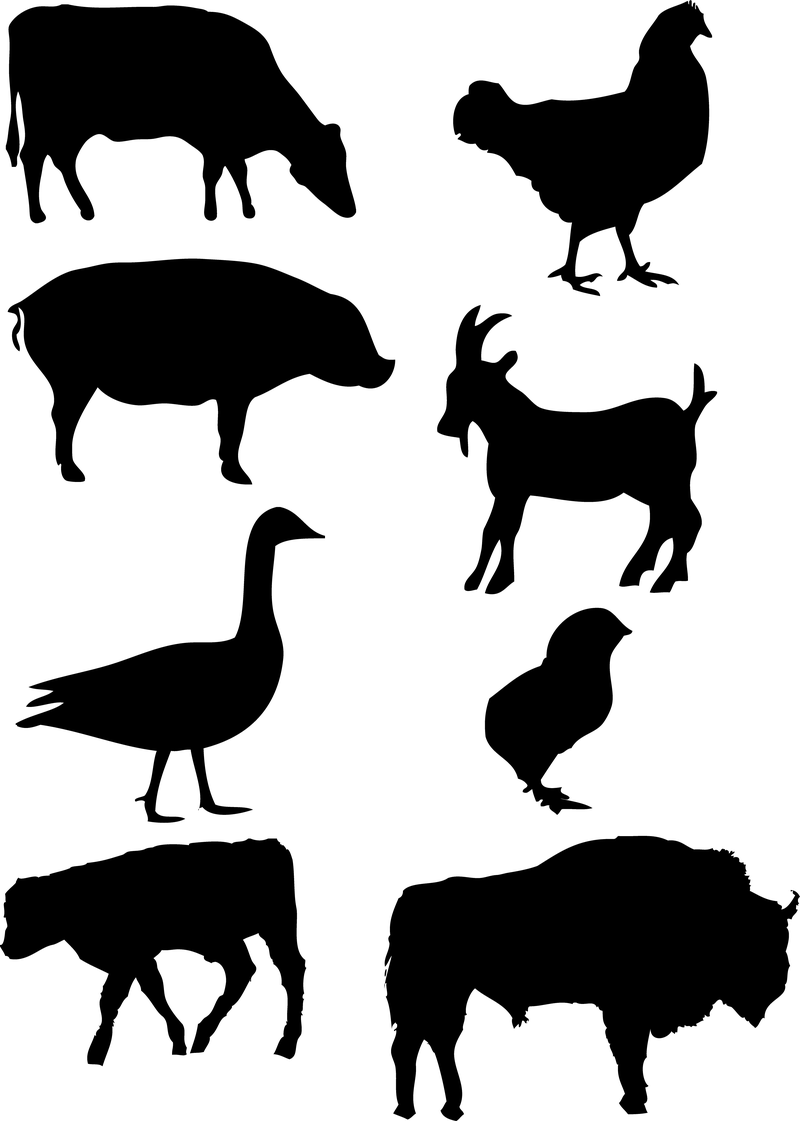 image; user - Animal Vector PNG