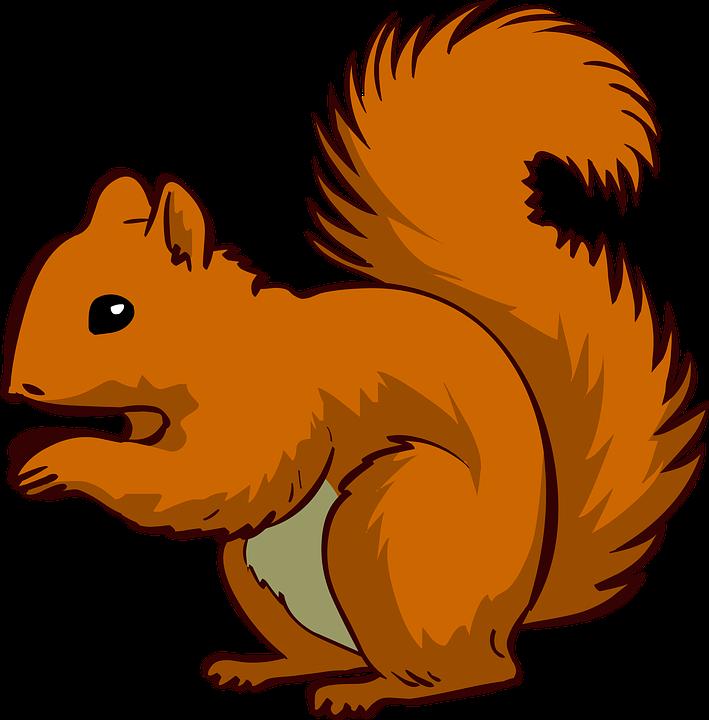 Squirrel, Animal, Pet - Animal Vector PNG