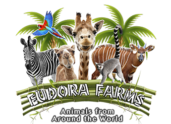 Eudora Farms - Animals At The Zoo PNG