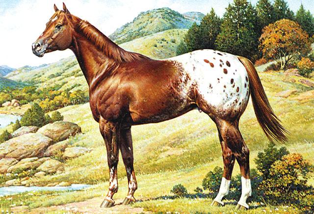 Appaloosa Horse Club Logo PNG Transparent Appaloosa Horse Club Logo