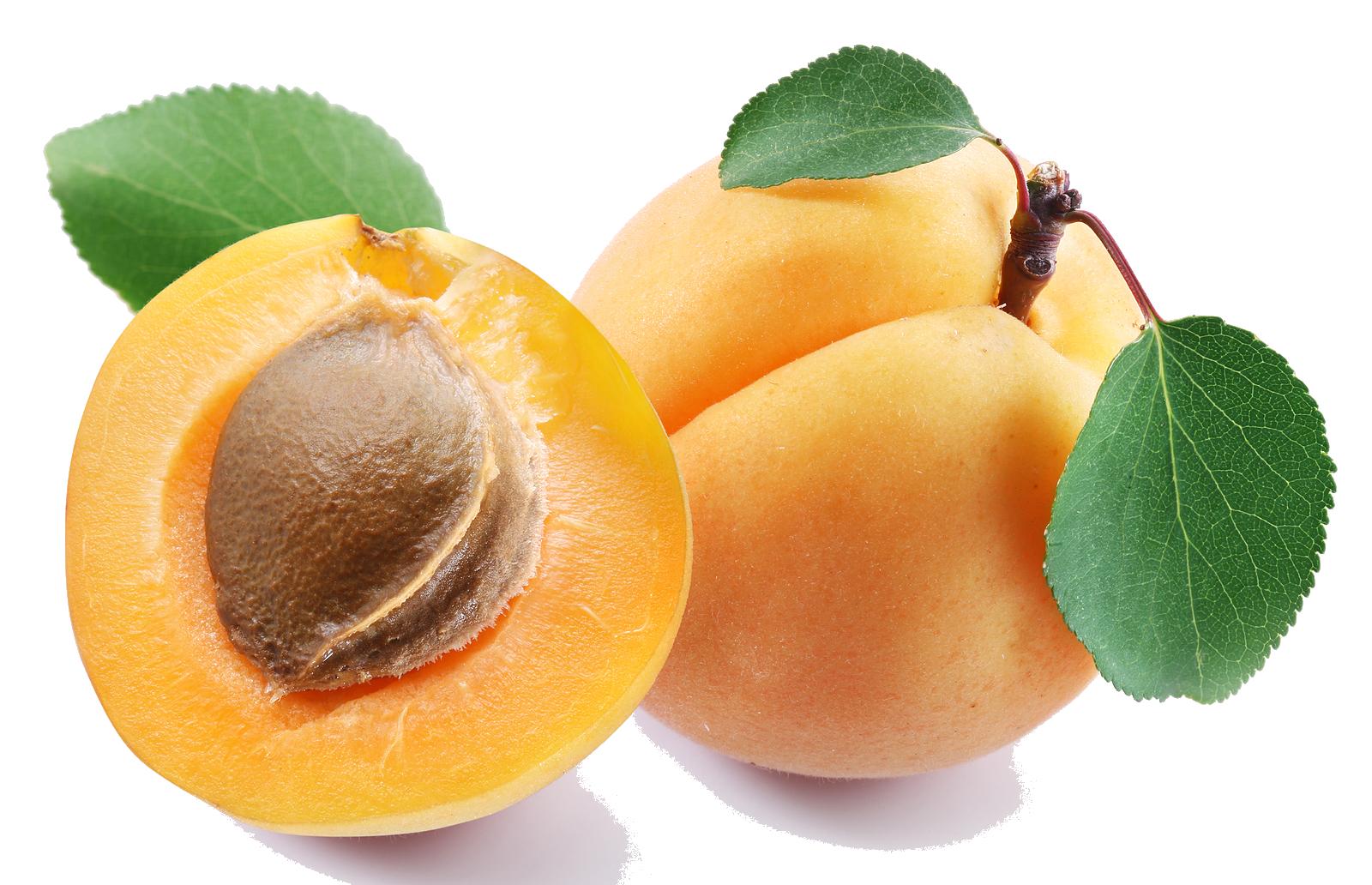 Apricot HD PNG - 92248