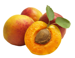 Apricot PNG - 17393